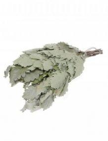 Vanta ąžuolinė