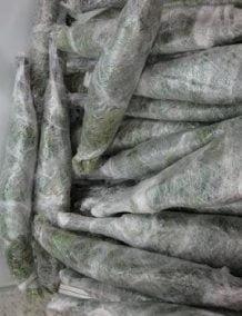 Šaldytos beržinės vantos